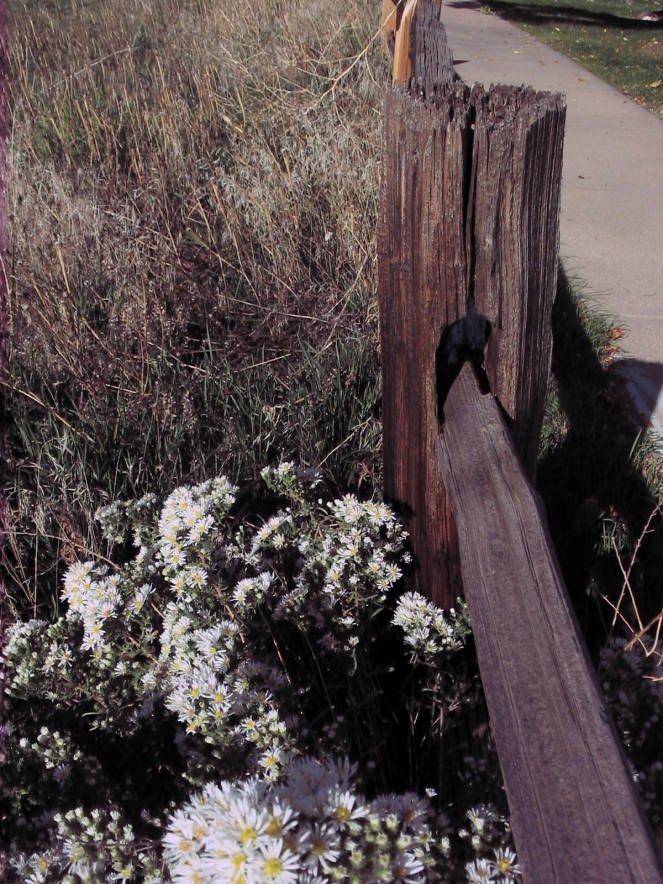 fence post with flowers