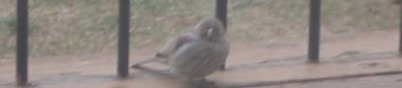 bird-on-porch
